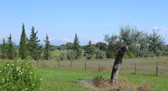 Terreno con Casa in Vendita a Caltagirone (Catania)