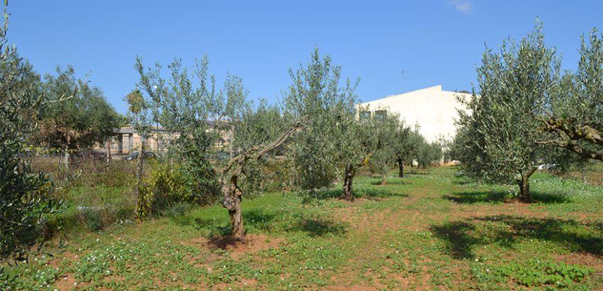 Terreno edificabile in Vendita a Niscemi ( Caltanissetta )